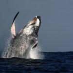 Byron Bay Whale